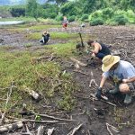 Volunteer at a Hawaiian fish pond