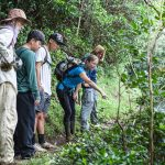 learn about Hawaiis nature while volunteering