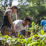 removing invasive plants at Kaneohe Bay