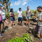 Volunteer for Hwaii and learn about the Hawaiian culture