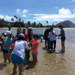 Volunteer in Hawaii