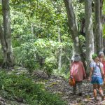 Experience Maui in a different way