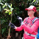 Remove non-native invasive species