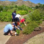 Planting native plants at Kaha Gardens