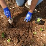 grow wetland in kaha garden