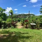Visit a Food Forest in Kauai