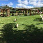 Tsue Farm Restoration