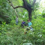 Hike and volunteer and learn about the Hawaiian flora and fauna