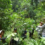 Get into the rainforest and volunteer for travel2change